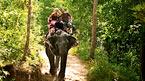 Viidakkosafari